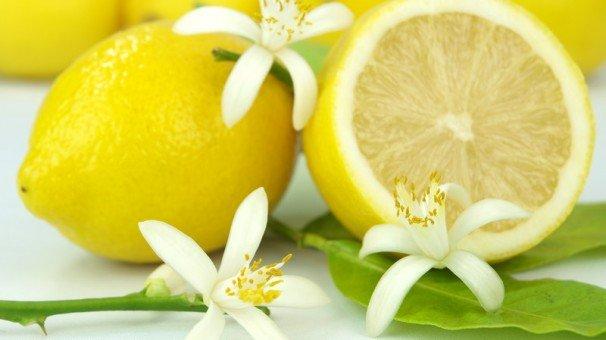 limone ovale Massa Lubrense2